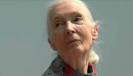 Jane Goodall, conferencia Paz y medio ambiente