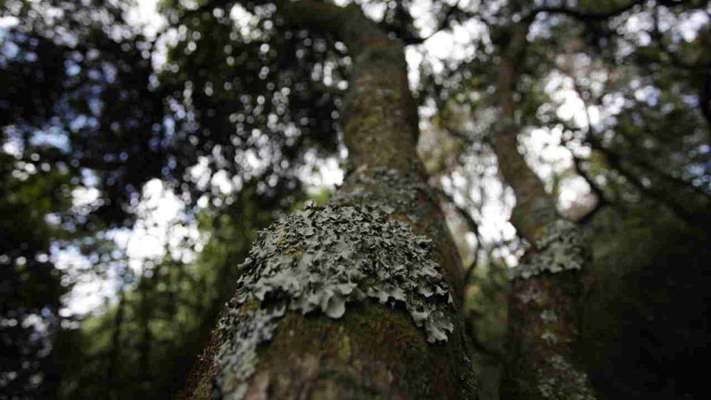 Imagen del tronco de un árbol en el embalse de Neusa.
