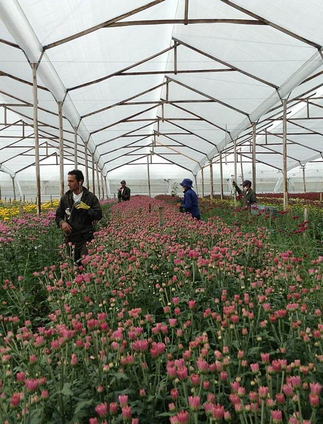 Vívero de cultivo de flores en la sabana de Bogotá