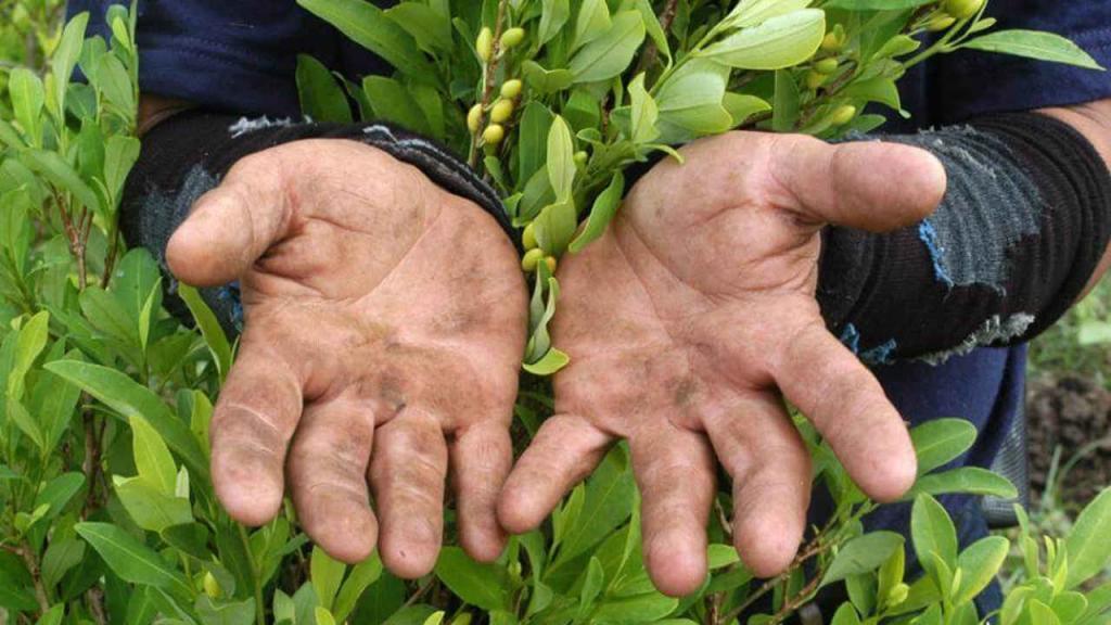 manos cultivando