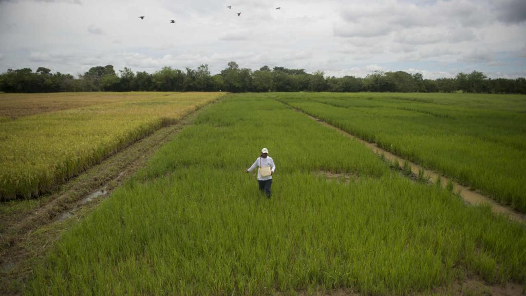 Juan Pablo Casadiego Guevara participará de la Cumbre Mundial Agrícola para la Juventud para buscar mitigar el hambre.
