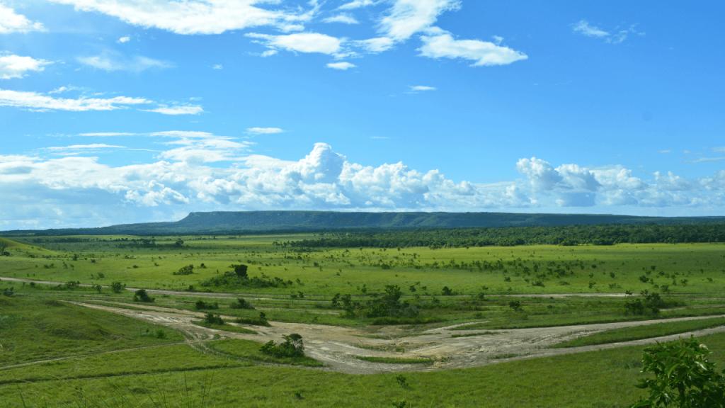 Imagen de uno de los paisajes de la región de la Orinoquia en Colombia.