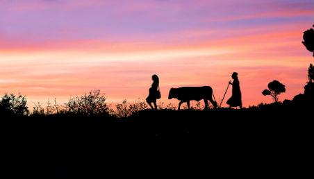 atardecer en el campo, vemos la silueta de una mujer embarazada, detrás de ella va una vaca y detrás de la vaca una mujer