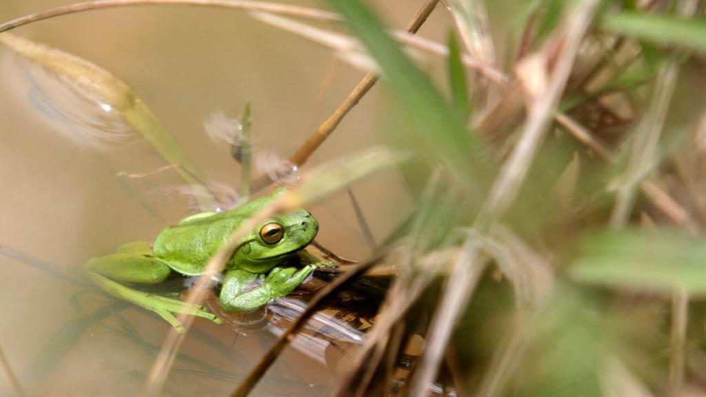 Una rana en su hábitat.