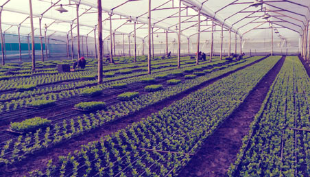 Imágen de plántulas y cultivos en vivero.