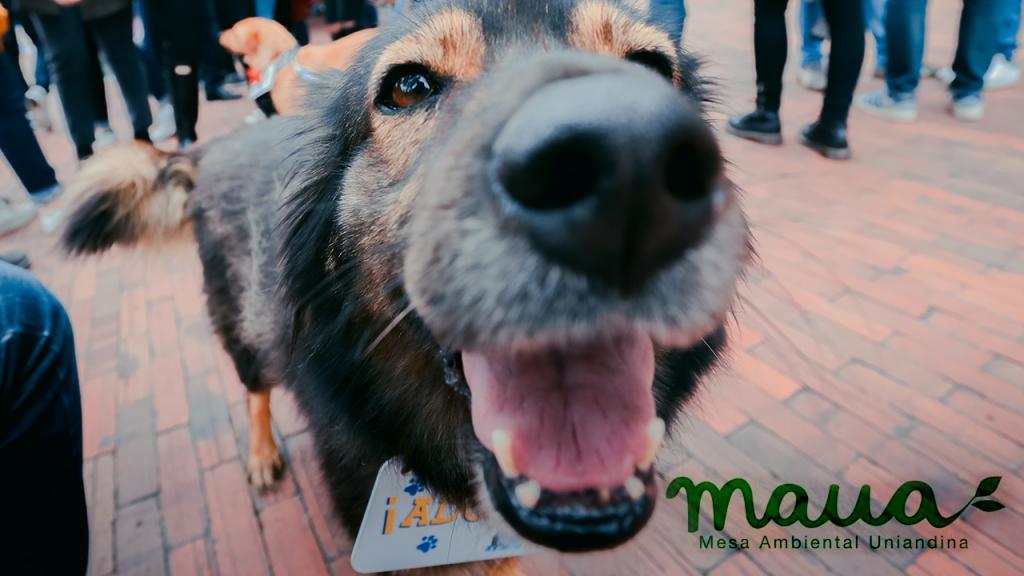 Fotografía de un Perro criollo