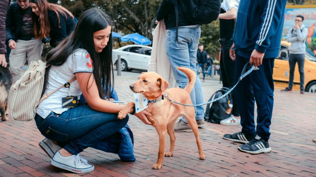 Joven estudiante acaricia un perro criollo