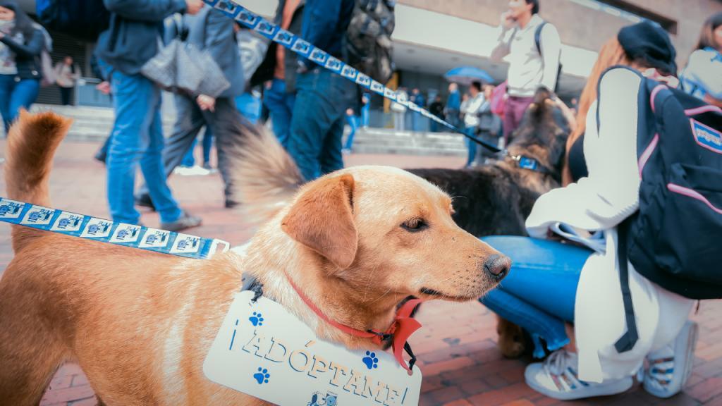 Un estudiante acaricia un perro criollo