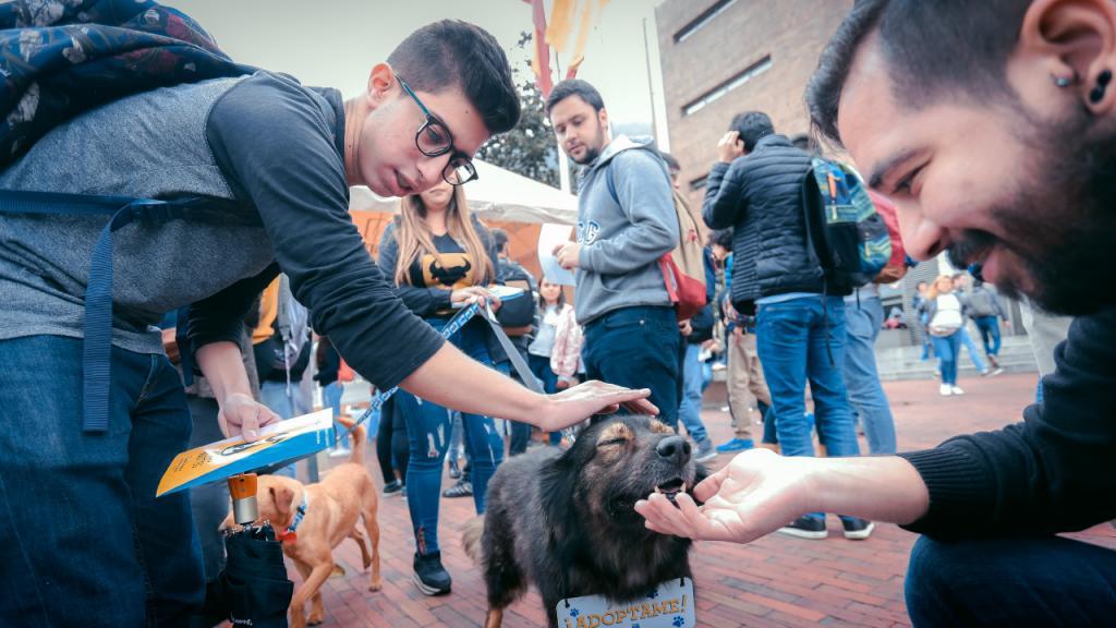 Dos hombre acarician un perro criollo