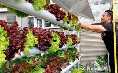 Hombre observa unas hortalizas en un cultivo vertical.