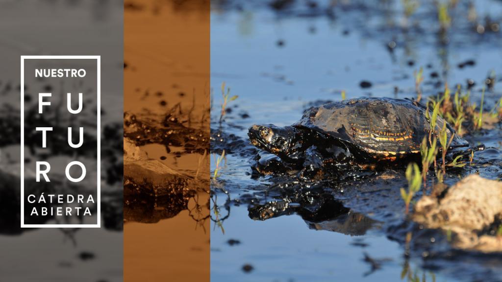 Una tortuga, en medio de un derrame de petróleo.
