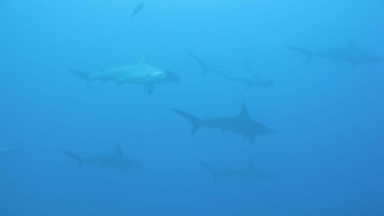 Foto de varias especies marinas en el océano
