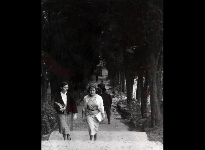 foto antigua en blanco y negro de dos estudiantes subiendo por camino de pinos en la universidad de los andes