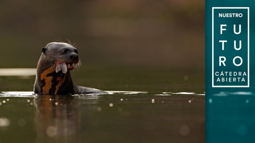 León marino con un pez en la boca.