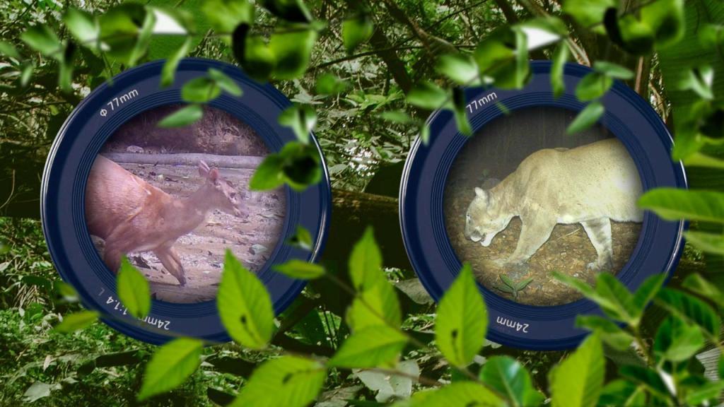 Composición gráfica de dos lentes de cámaras con la imagen de dos animales