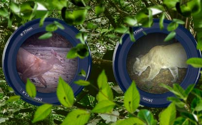 Photo montage of a lens showing a deer and a jaguar