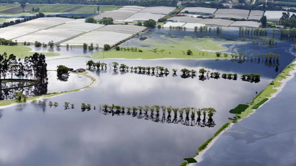 Cultivo inundado.