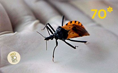 Chagas disease is not commonly studied, but globally it affects six million people.