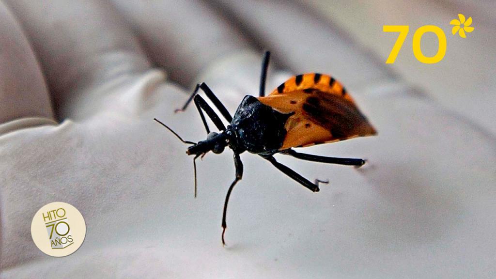 El Chagas es una enfermedad de la que pocos se ocupan pero que afecta a seis millones de personas en el mundo.