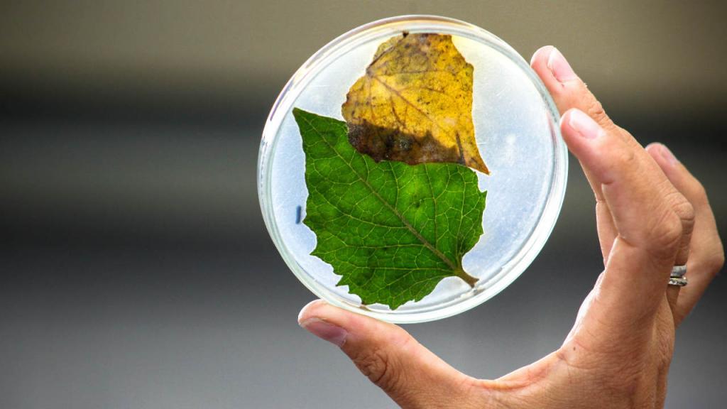 Imagen de uno de los laboratorios de la Universidad de los Andes, con una planta dentro de un recipiente.