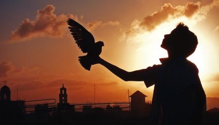 Imagen de niño con una paloma en la mano