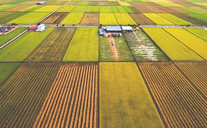 Seeded fields