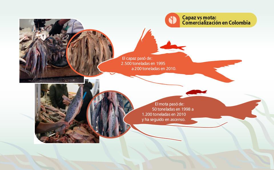 gráfico del pez mota