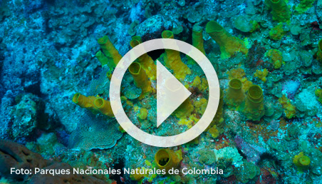 El convenio entre la Universidad de los Andes y Parques Nacionales Naturales (PNN) se firmó el 30 de abril de 2019 y tendrá vigencia de ocho años.
