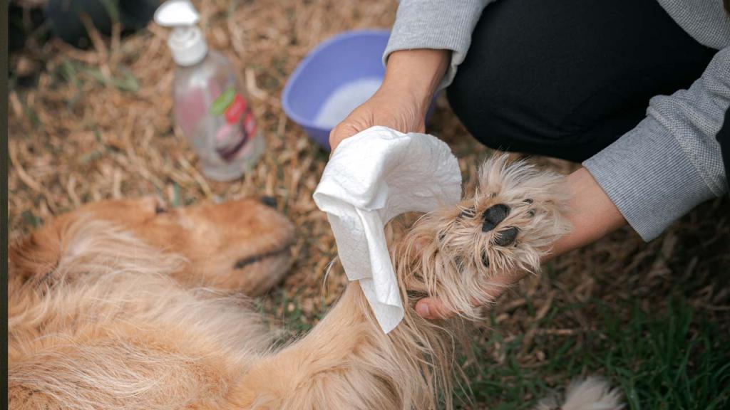 cuidado de perros durante coronavirus