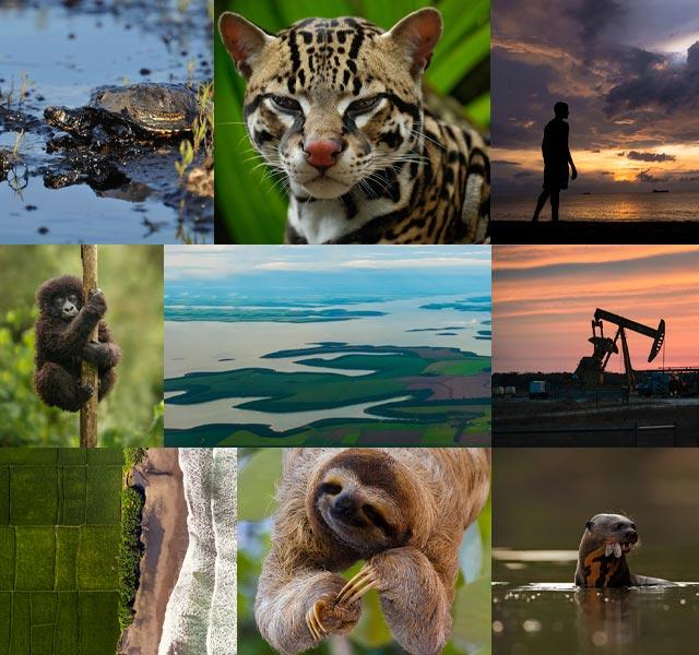 Collage de animales y paisajes