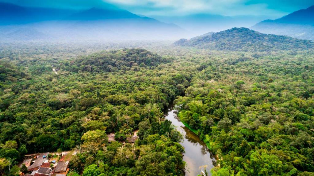 Extensión de árboles verde y río