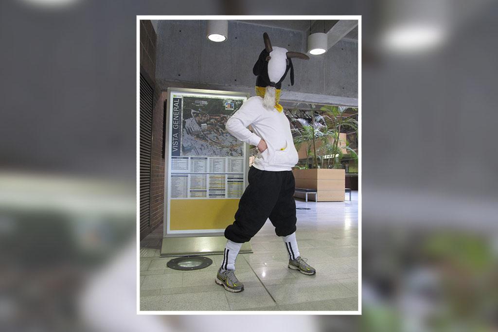 En años recientes, la cabra fue reemplazada por un disfraz, que hace presencia en momentos importantes.
