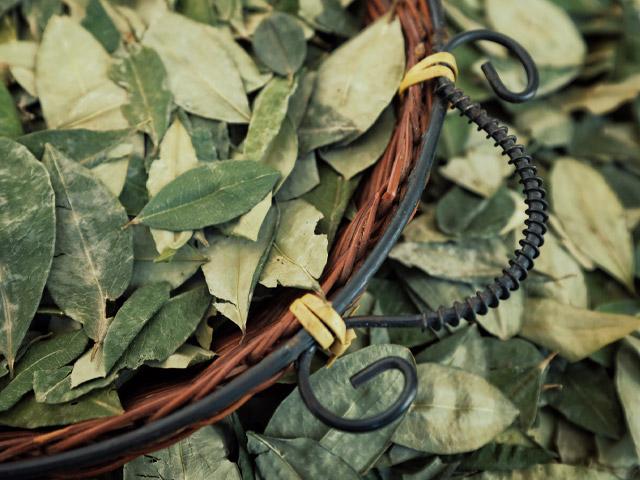 Foto de hojas de coca