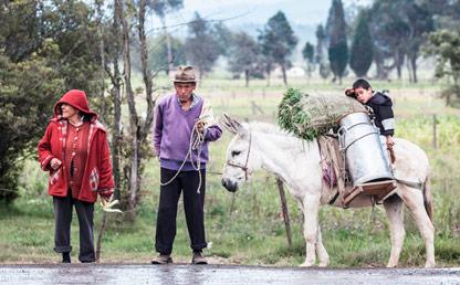 Dos campesinos junto a una mula cargada.