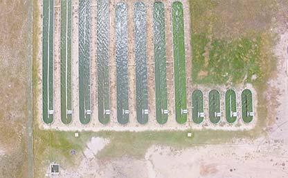 Foto de la planta de ficorremediación de Ficosucre
