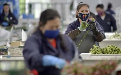 Mujeres con tapabocas preparan flores.