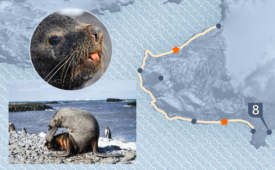 Graphic with map indicating point of the photo that accompanies the image where are seen sea lions of the Antarctic