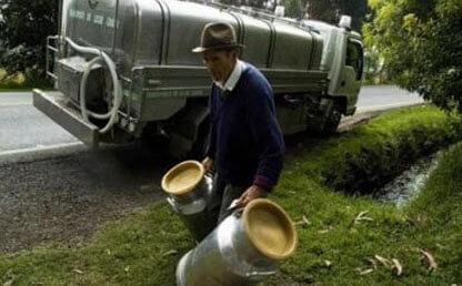 Hombre campesino cantinas leche