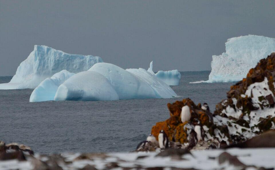 icebergs de gran tamaño se ven a lo lejos y en tierra se ven pingüinos