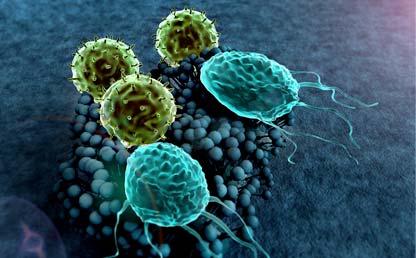Modelo 3D de linfocitos T. Eduardo Behrentz