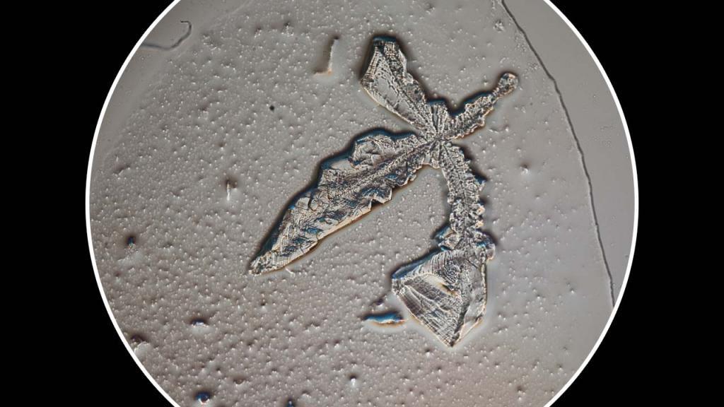Micrográfias de cristales de lágrimas.