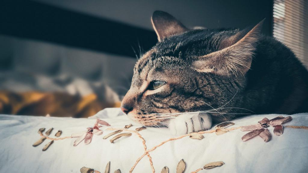 Foto de un gato acostado en la cama