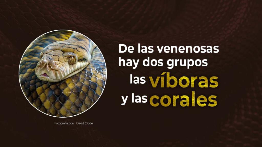 Gráficas informativas sobre culebras y serpientes