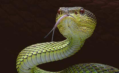 Photo of a snake