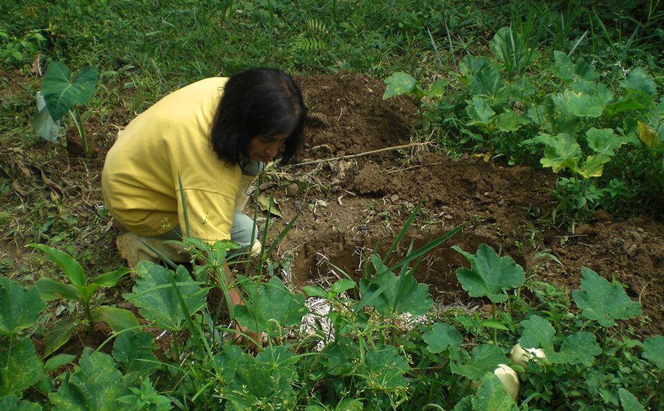 mujer cosechando los cultivos de una huerta