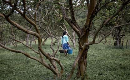 Foto de  una mujer llevando unos baldes en medio del bosque.