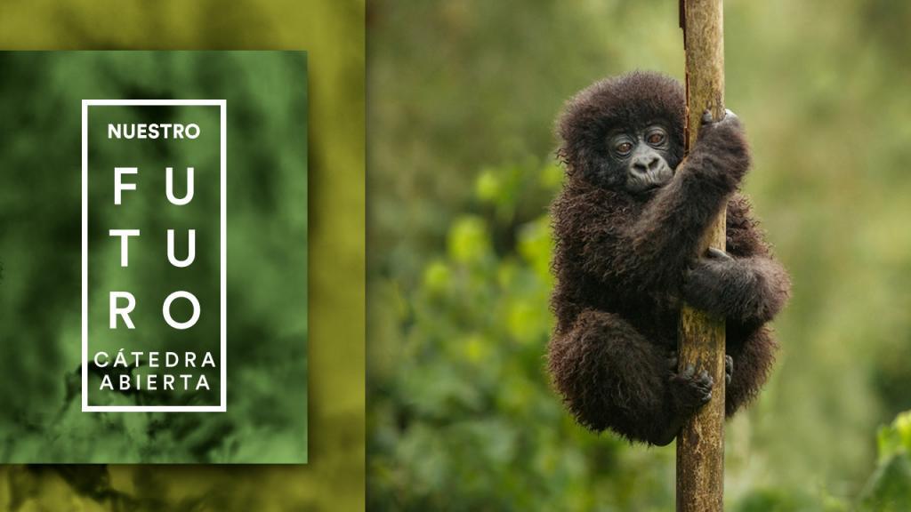 Un mono cuelga de un árbol.