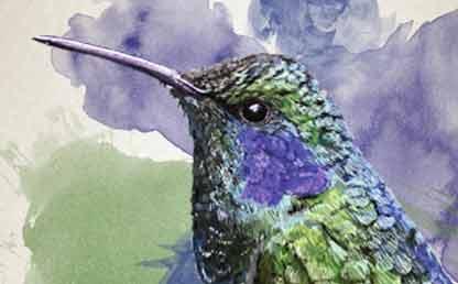 Ilustración de un colivrí