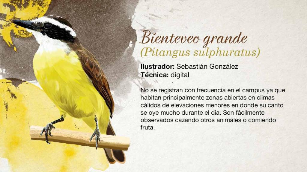 Ilustración de un pájaro amarillo de pico grande.