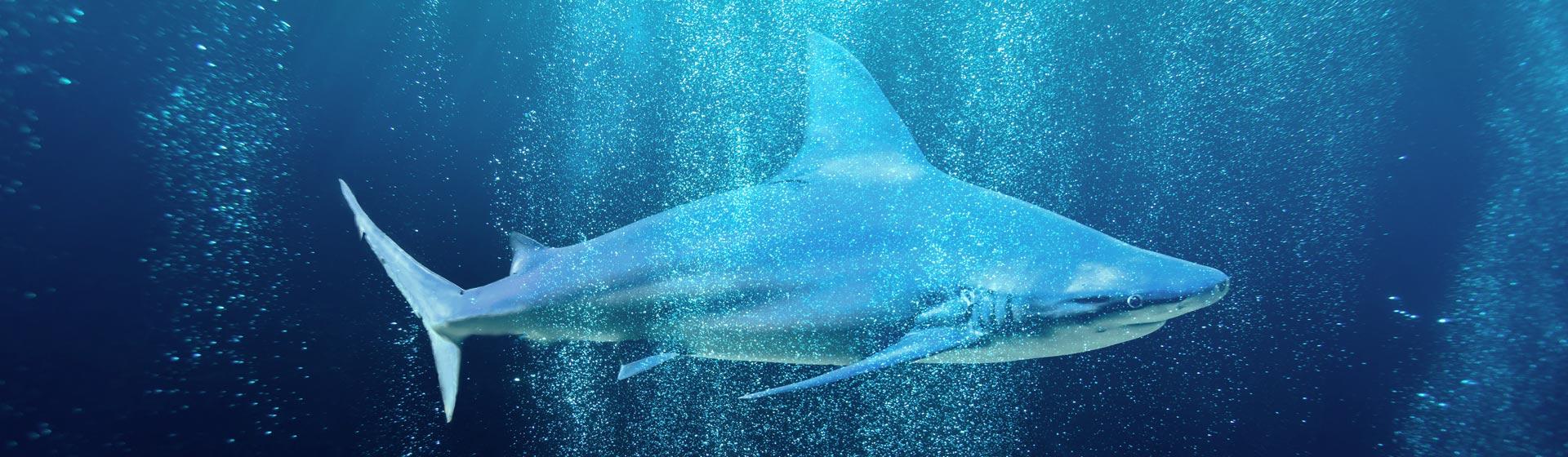 Imagen de un tiburón
